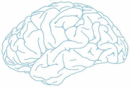images de circonvolutions cérébrales