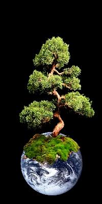 Un arbre qui dépasse le volume de la Terre
